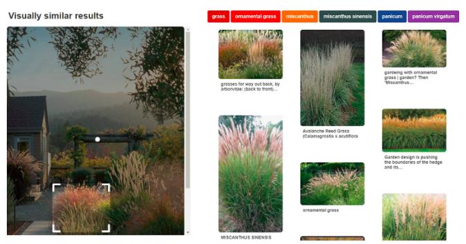 Визуальный поиск: как найти в сети нужный контент по картинке
